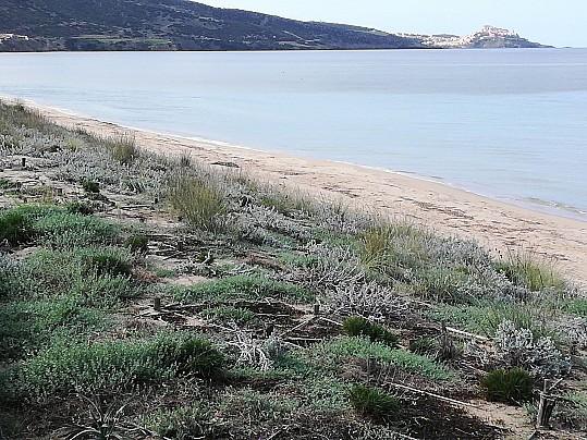 Dune di San Pietro a mare