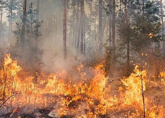 Stato di massima pericolosità per incendi boschivi