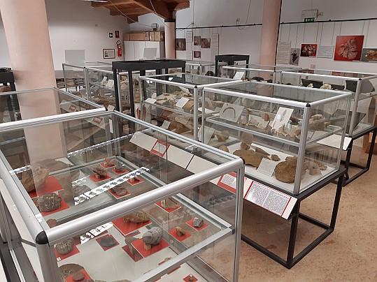 Museo fedrigo 1