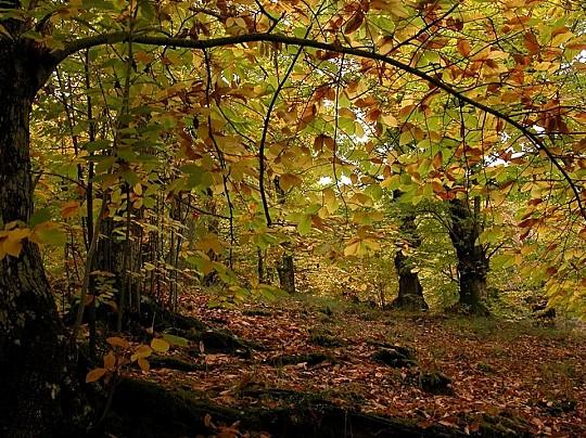 il bosco di castagne