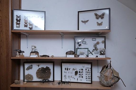 Collezioni del museo