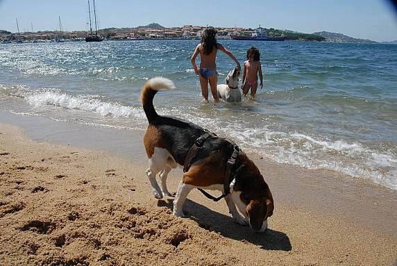 Bau Bau Beach Palau spiaggia cani 1