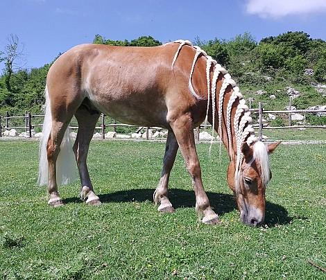 agromnia_cavallo