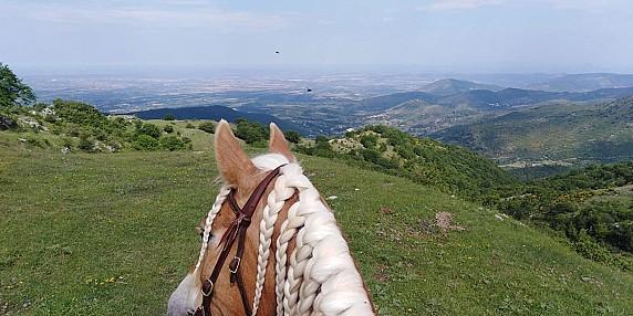 agromnia_cavallo_2
