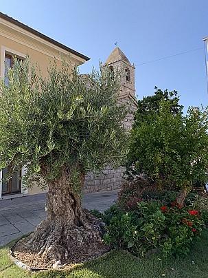 Arzachena Estate in fiore 2019 6° edizione (54)web